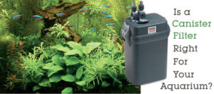 Aquarium Filtration Importance