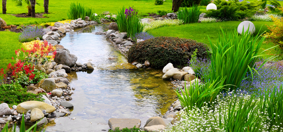 Water garden algae control hollywood fish farm for Decorative pond fish