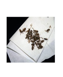 Aristocrat Freeze Dried Crickets 55G