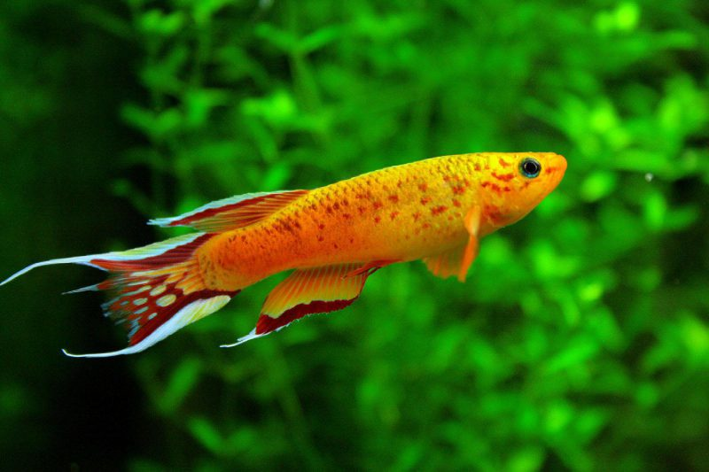 Freshwater Tropical Live Stock Albany